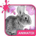 Cute Bunny Animated Keyboard