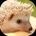 Hedgehogs Live Wallpaper