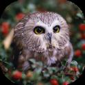 Owls Live Wallpaper