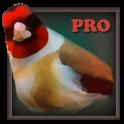 Quiz sur les oiseaux pro