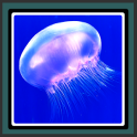 Live Wallpapers - Jellyfish