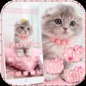 Linda bote gato tema Cute Kitty Cat