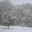 Snowing Live Wallpaper HD 4