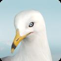 Jonathan Livingston Seagull Part 1
