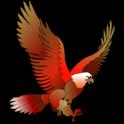 King Bird Oman / kboman / kb oman / OPC89546