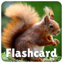 Animal flashcard & sounds for kids & toddlers