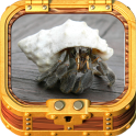 Healthy Hermit Crab