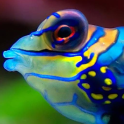 fish swimming live wallpaper