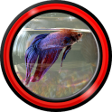 Aquarium Live Wallpapers for Android™