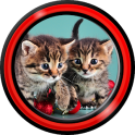 Kittens Live Wallpapers