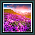 Live Wallpapers Spring Flowers