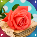 Rose Flower Live Wallpapers