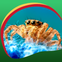 Spider Live Wallpapers