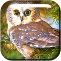 Lovely Owls Live Wallpaper