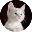 Animated kittens HD Wallpapers