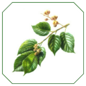Herbal Medicine Bangla
