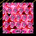 Pink Rose Keyboards