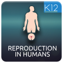 Reproduction in Humans