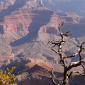 grand canyon live wallpaper