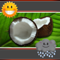 Coconut Clock And Weather