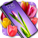 Tulip Magic Flowers Live Wallpapers HD Themes