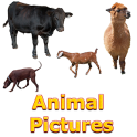 Animals Name and Pictures for Kids