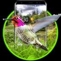 Live 3D HummingBird Theme