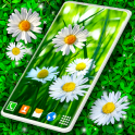 3D Daisy Live Wallpaper Spring Field Themes