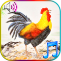 Funny Wake Up Ringtones