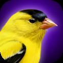 iBird Yard Plus Guide to Birds