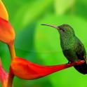 Birds Live Wallpaper Beautiful Pictures