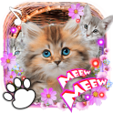 Kittens Lovely Live Wallpaper