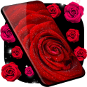 Red Rose Live Wallpaper Flowers 4K Wallpapers
