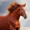 Horse Sounds and Ringtone free
