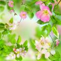 부드러운꽃이라이브 배경 화면