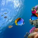 समुद्री मछली लाइव वॉलपेपर