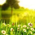 Frühling Live Hintergrund