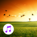 Nature Sounds Relax Sleep Pro