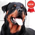 Rottweiler Dog Wallpapers
