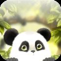 Panda Chub Wallpaper Kostenlos