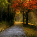 Rain In Autumn Live Wallpaper