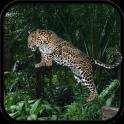 Wild Leopard Simulator 3D