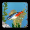 aniPet 민물고기 수족관 라이브 배경화면 (무료)