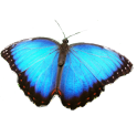 Butterfly Icon Theme