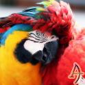 Xperien Theme Scarlet Macaw