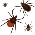 Lyme Disease Safety Lite