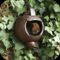 DIY Bird House Ideas
