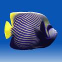 Fishies (School of Fish)