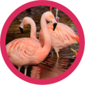 Beautiful Flamingo WP