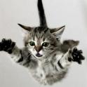 Catch kittens